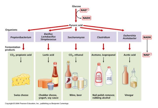 Los análisis al alcoholismo
